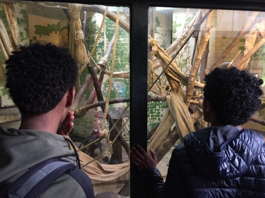 Young refugees take a trip to the zoo!